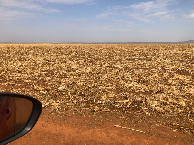 1480 Hectares, argilosa acima 40%, planta soja, algodão, milho, Diamantino-MT - Foto 2