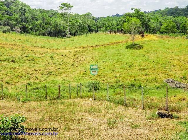 Fazenda mista de cacau e gado. Área de 203 Hectares - Foto 14