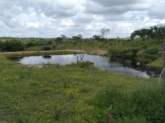 Maravilhosa fazenda na região rural de Baixa Grande Bahia, a 150 km de Feira de Santana - Foto 3