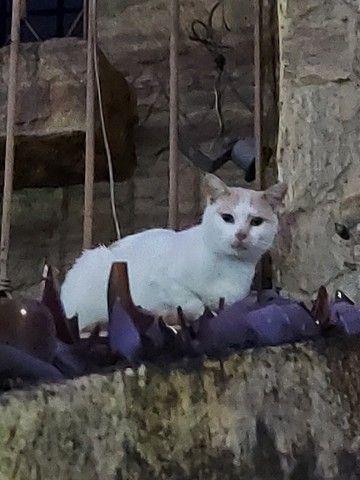 Adote um Gatinho Abandonado - Foto 2