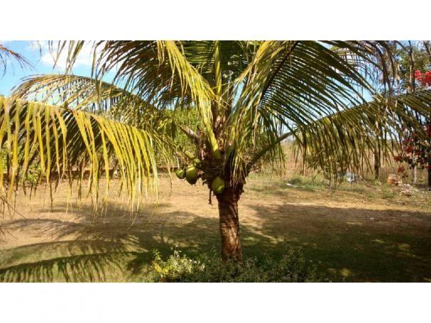 Chácara à venda em Eldorado, Cuiaba cod:22634 - Foto 13