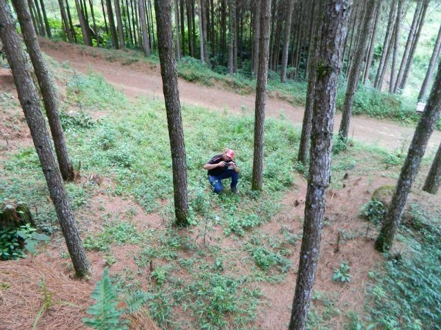 Floresta de Pinus - Foto 14