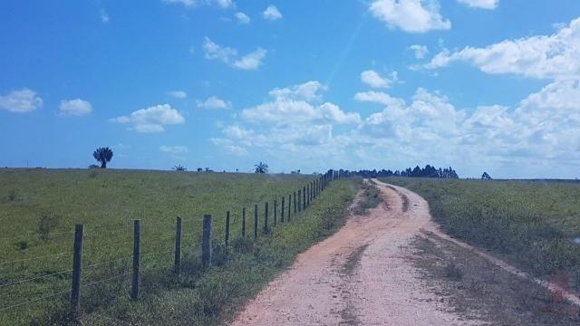 Maravilhosa Fazenda em Barrolândia, Belmonte - BA com 809 Hectares... - Foto 16