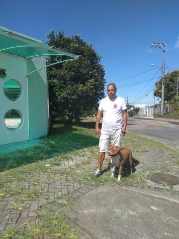Passeador e Adestrador de cães - Foto 5