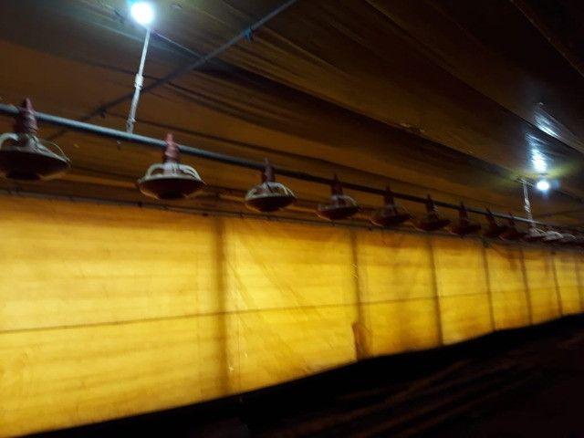 Aviário 12x128 equipamentos silo bebedouro comedouro forno - Foto 3