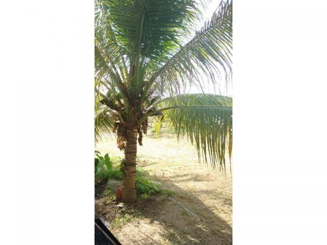 Chácara à venda em Eldorado, Cuiaba cod:22634 - Foto 10
