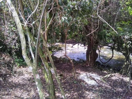 Terreno à venda em Parque veneza, Cachoeiras de macacu cod:TE0116