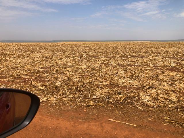 1480 Hectares, argilosa acima 40%, planta soja, algodão, milho, Diamantino-MT