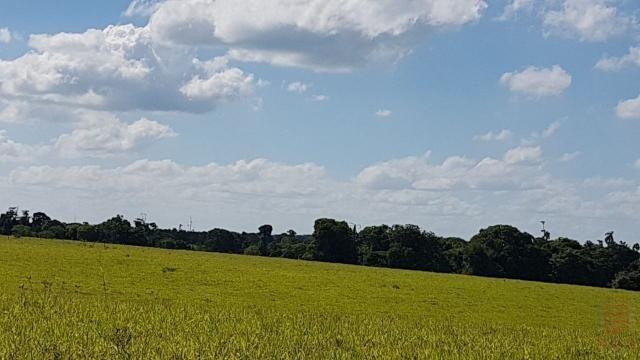 Maravilhosa Fazenda em Barrolândia, Belmonte - BA com 809 Hectares... - Foto 9