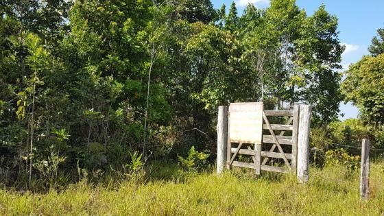 Maravilhosa Fazenda em Barrolândia, Belmonte - BA com 809 Hectares... - Foto 7