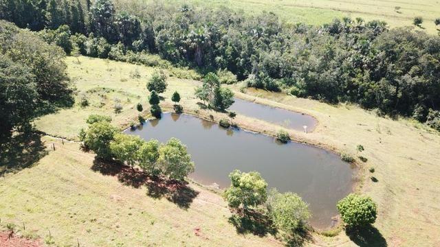 Fazenda 16.5 Alqueires ( 80 ha) Aragoiânia-GO - Foto 2