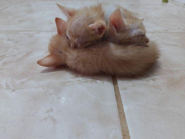 Doa se filhote de Gato
