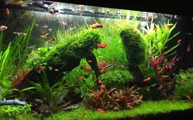 Monte seu aquário conosco Niterói  - Foto 2