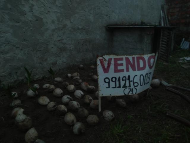 Muda de coco anão - Foto 2