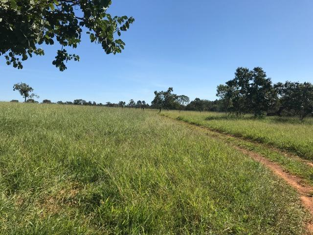 Fazenda 16.5 Alqueires ( 80 ha) Aragoiânia-GO - Foto 11