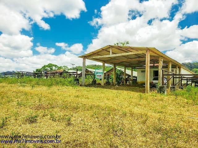 Fazenda mista de cacau e gado. Área de 203 Hectares - Foto 6