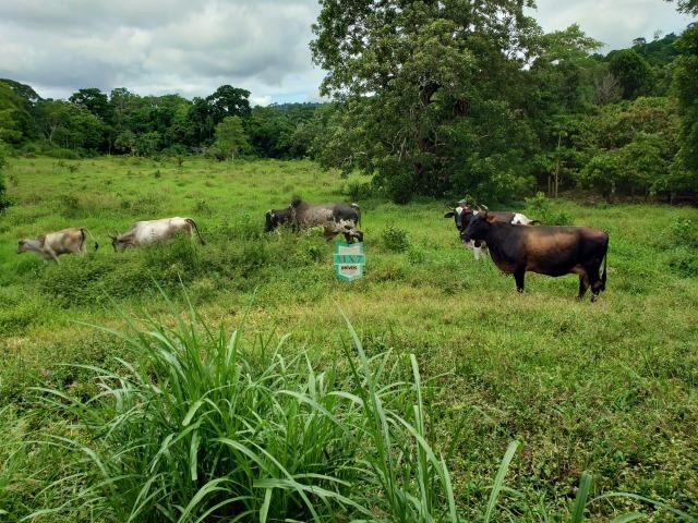 Ubaitaba. Fazenda produtiva de 139 Hectares a beira do asfalto. - Foto 17