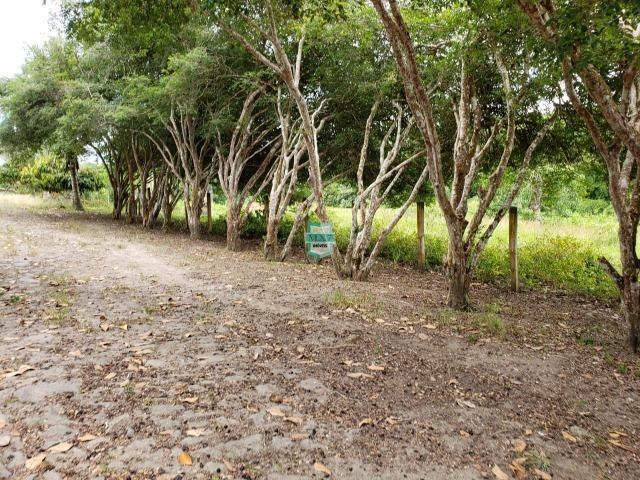 Ubaitaba. Fazenda produtiva de 139 Hectares a beira do asfalto. - Foto 14