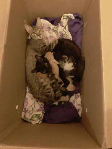 Doa se filhote de Gato - Foto 6