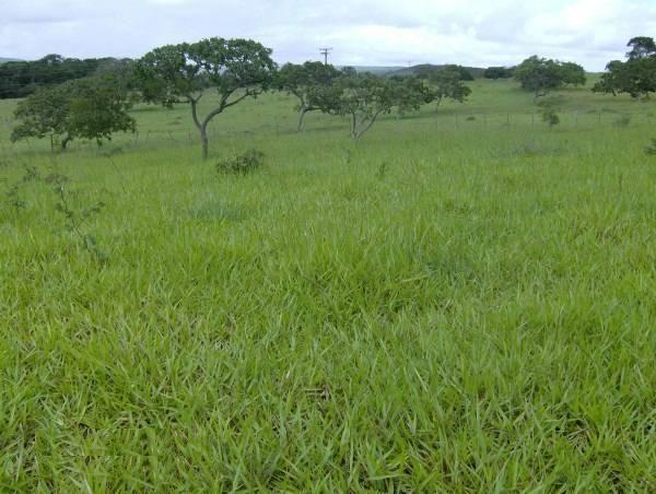 Fazenda escriturada formada ao lado de Brasília troca 61 9  * - Foto 2