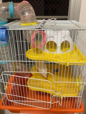 Gaiola para Hamster American Pet nova