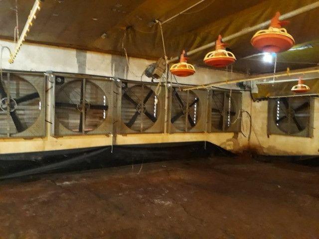 Aviário 12x128 equipamentos silo bebedouro comedouro forno - Foto 5