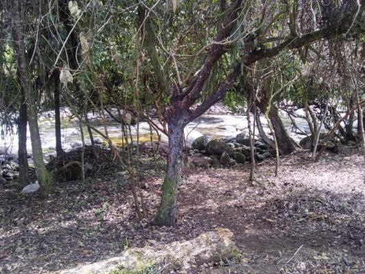 Terreno à venda em Parque veneza, Cachoeiras de macacu cod:TE0116 - Foto 4