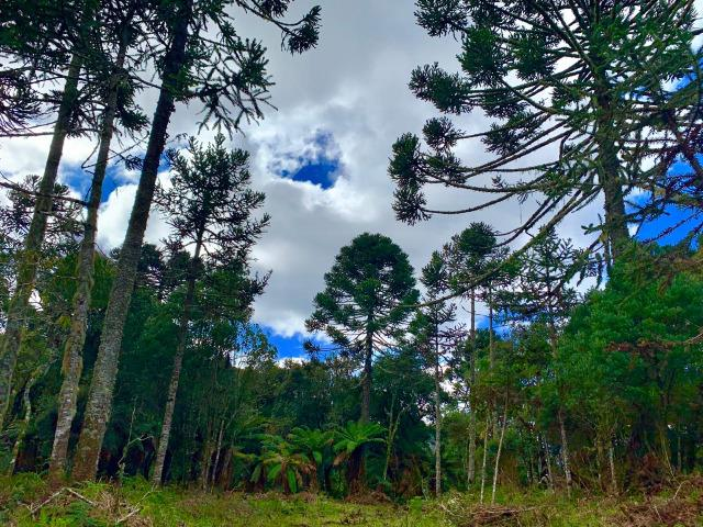 Urubici Chácaras/ sitios em Urubici/ terrenos em Urubici - Foto 13