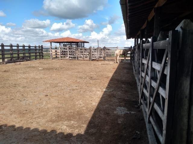 Maravilhosa fazenda na região rural de Baixa Grande Bahia, a 150 km de Feira de Santana - Foto 5