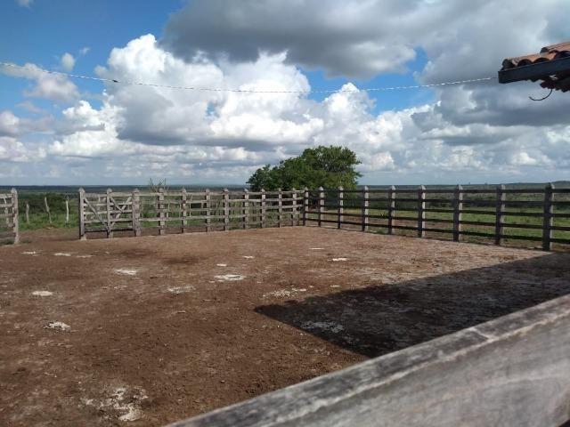 Maravilhosa fazenda na região rural de Baixa Grande Bahia, a 150 km de Feira de Santana - Foto 4