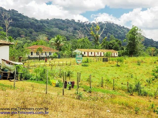 Fazenda mista de cacau e gado. Área de 203 Hectares - Foto 10