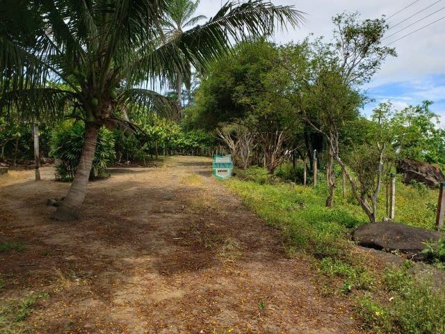Ubaitaba. Fazenda produtiva de 139 Hectares a beira do asfalto. - Foto 15