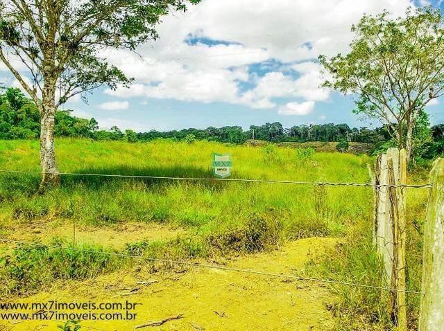 Fazenda mista de cacau e gado. Área de 203 Hectares - Foto 15
