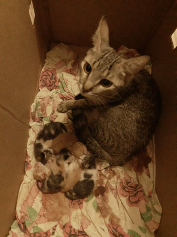 Doa se filhote de Gato - Foto 3