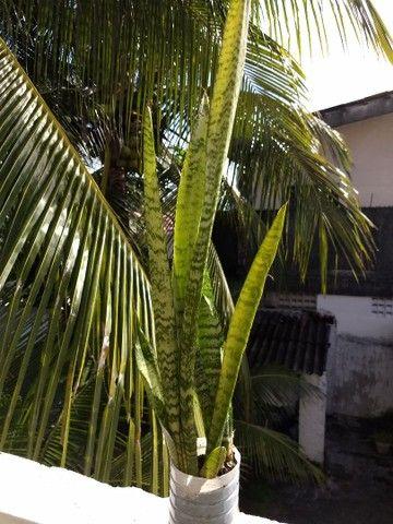 Planta Ornamental