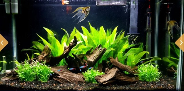 Monte seu aquário conosco Niterói  - Foto 3