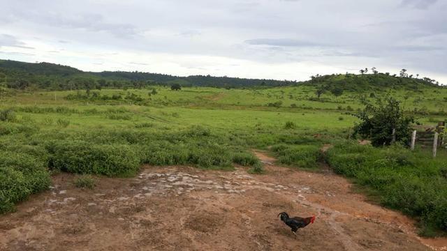 Fazenda 282 alqueires a 1 km do asfalto em açailândia - Foto 4