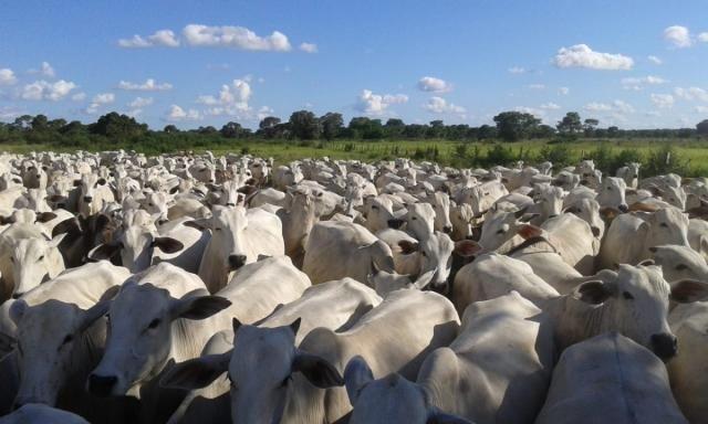 8271 | fazenda à venda em poconé mt - Foto 4