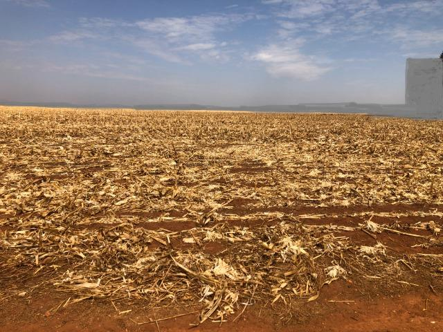 1000 Hectares, argilosa acima 40%, planta soja, algodão, milho, Diamantino-MT - Foto 2