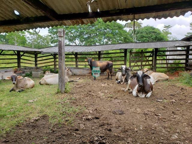 Ubaitaba. Fazenda produtiva de 139 Hectares a beira do asfalto. - Foto 8