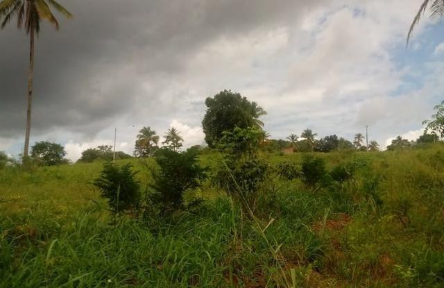 Excelente propriedade de 4 hectares, em Dois Leões, Pombos-PE - Foto 4