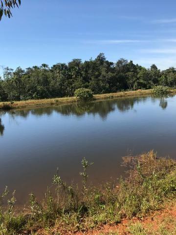 Fazenda 16.5 Alqueires ( 80 ha) Aragoiânia-GO - Foto 9