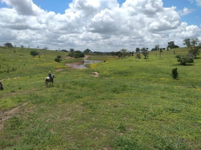 Maravilhosa fazenda na região rural de Baixa Grande Bahia, a 150 km de Feira de Santana - Foto 6