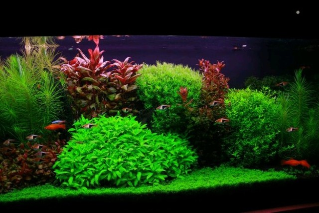 Monte seu aquário conosco Niterói  - Foto 5