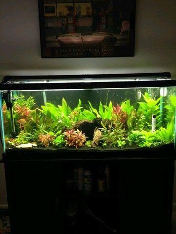Plantas aquáticas para aquário  - Foto 2