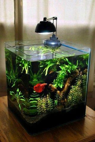 Monte seu aquário conosco Niterói  - Foto 6