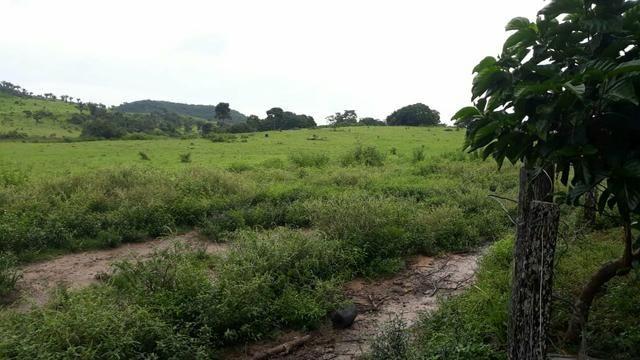 Fazenda 282 alqueires a 1 km do asfalto em açailândia - Foto 5