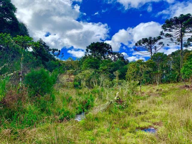 Urubici Chácaras/ sitios em Urubici/ terrenos em Urubici - Foto 4