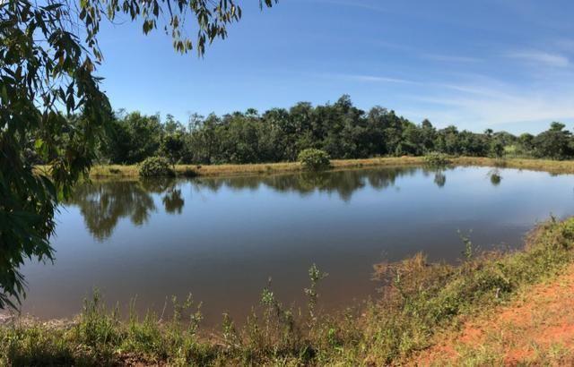 Fazenda 16.5 Alqueires ( 80 ha) Aragoiânia-GO - Foto 10