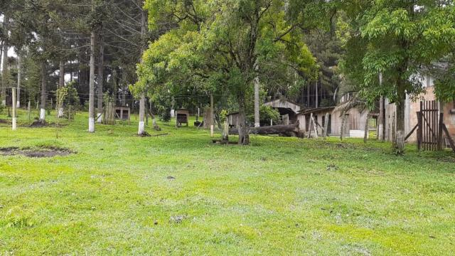Sitio à venda, 40.500,00M² por R$400.000,00 - RIO DO SALTO - RIO NEGRINHO/SC - Foto 8